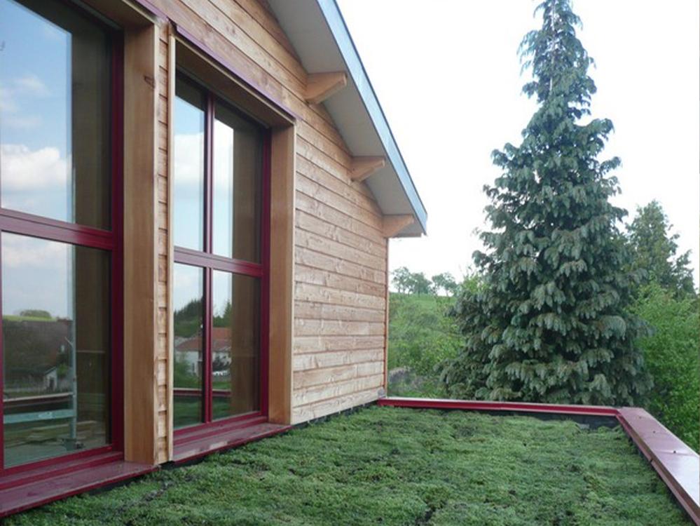 ossature bois toiture vegetalise